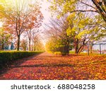dry leaf fallen and sunshine on ... | Shutterstock . vector #688048258