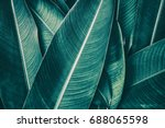 tropical leaf texture  dark... | Shutterstock . vector #688065598