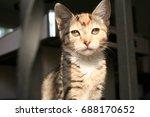 kitten | Shutterstock . vector #688170652