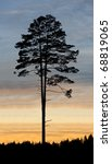 Single pine tree against colorful sunset - stock photo