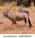 Gemsbock Or Gemsbuck  Oryx...