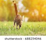 Cute Tabby Quickly Runs Throug...