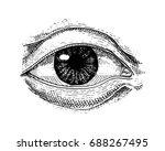 human biology  organs anatomy... | Shutterstock .eps vector #688267495