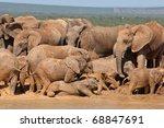 African Elephant Mudbath  Sout...