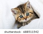 Stock photo tabby kitten with a blanket 688511542