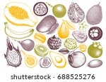 set of hand drawn tropical... | Shutterstock . vector #688525276