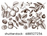 collection of hand drawn trees... | Shutterstock . vector #688527256