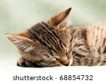 Stock photo tabby cat sleep on bed 68854732