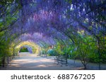 wisteria lane in the adelaide... | Shutterstock . vector #688767205