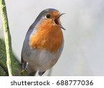 springtime male european robin  ...   Shutterstock . vector #688777036