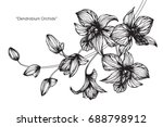 dendrobium orchid flowers by... | Shutterstock .eps vector #688798912