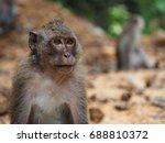 ape in koh chang | Shutterstock . vector #688810372
