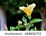 yellow flower    Shutterstock . vector #688856752