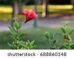 red flower   Shutterstock . vector #688860148