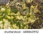 Colorful Bacteria  Barnacles...