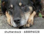 dog outside | Shutterstock . vector #688896028