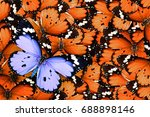 lonely lilac butterfly among... | Shutterstock . vector #688898146