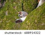 Squirrel Sitting On A Tree...