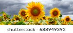 summer web banner or... | Shutterstock . vector #688949392