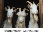 steep goats three goats on a... | Shutterstock . vector #688958602