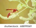oriental hornet - stock photo