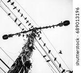 birds on a light pole  pole ...   Shutterstock . vector #689013196