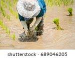 transplanting rice cultivation  ... | Shutterstock . vector #689046205