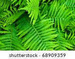 green fern as a background - stock photo