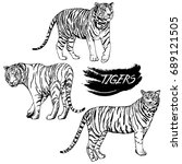 hand drawn sketch style tigers. ... | Shutterstock .eps vector #689121505