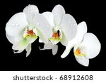 white orchid with drop of dew on black background, valentine concept - stock photo