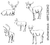 deer sketch. pencil drawing by... | Shutterstock . vector #689128342