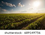 tractor spraying pesticides on... | Shutterstock . vector #689149756