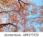 Autumn Leaves  Pink Leaves Wit...