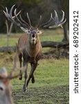big and beautiful red deer... | Shutterstock . vector #689202412