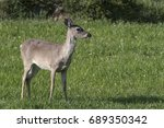 Small photo of Deer Doe profile