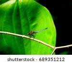Dragonfly Sitting On A Twig...
