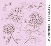 hand drawn sketch of hydrangea... | Shutterstock .eps vector #689421592