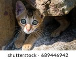 Small photo of Stray kitten in Asia