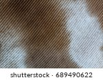 Small photo of Details of the feather of a Common Mouser. Buteo buteo.