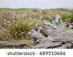 Driftwood And Wildflowers