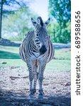 Small photo of zebra stripes