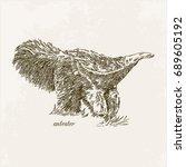 anteater. engraving. vintage... | Shutterstock .eps vector #689605192