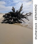 Small photo of Tree Root