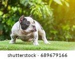 pit bull dog cute  curious... | Shutterstock . vector #689679166