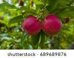 gala apples | Shutterstock . vector #689689876