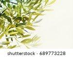 olives on olive tree. season... | Shutterstock . vector #689773228