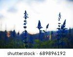 blue salvia purple flowers... | Shutterstock . vector #689896192