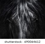 Stock photo portrait close up spanish purebred horse with long mane black and white photo can be used for 690064612