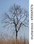 Small photo of Alone death tree