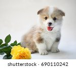 Dog Corgi Puppy Pembroke Smile...